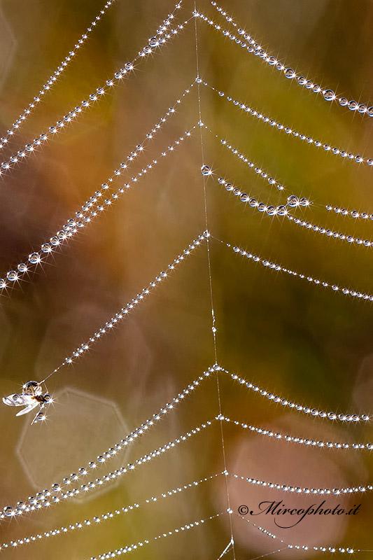 Perle di rugiada
