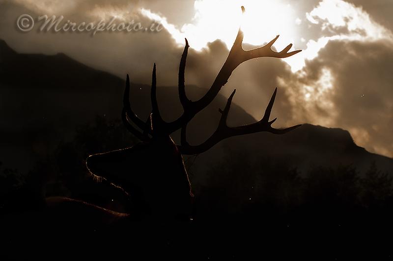 Sua maestà……..re dei boschi e della notte