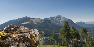Coronella austriaca …………….