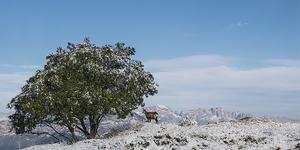 La prima neve!