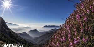 Paesaggi fioriti
